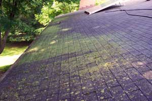 Exceptional Tri County Roof Cleaners Frequent Questions